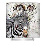 Grevys Zebra, Samburu, Kenya Shower Curtain