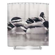 Group Of Ducks Shower Curtain