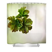 Growing Red Currant Shower Curtain