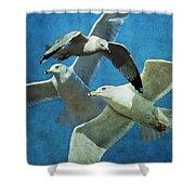 Gulls In Flight Shower Curtain