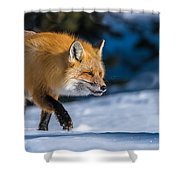 Handsome Mr. Fox Shower Curtain