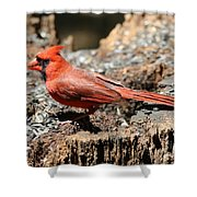 Hungry Cardinal Shower Curtain