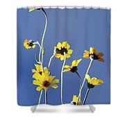 Happy Daisies Shower Curtain