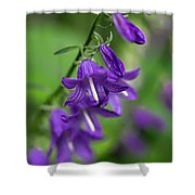Harebells 2n Shower Curtain