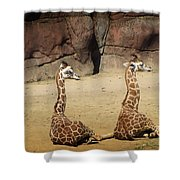 Having A Giraffe Shower Curtain