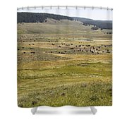 Hayden Valley Herd Shower Curtain