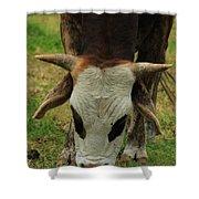Head Of A Bull Shower Curtain
