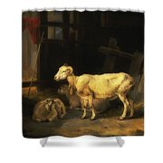 Heath Ewe And Lambs Shower Curtain