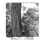 Heaven's Tree Shower Curtain