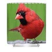 Hello Cardinal Shower Curtain