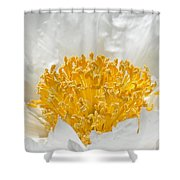Herbaceous Peony 2 Shower Curtain
