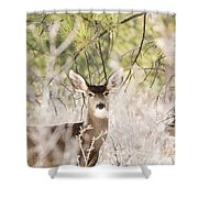 Herd Of Mule Deer In Deep Snow Shower Curtain