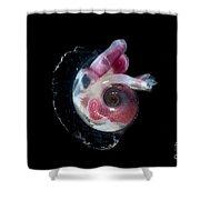Heteropod Mollusk Shower Curtain