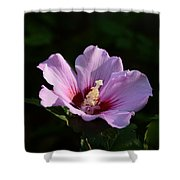 Hibiscus Light Shower Curtain