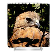 Hiding In The Trees Shower Curtain