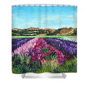 Highway 246 Flowers 3 Shower Curtain