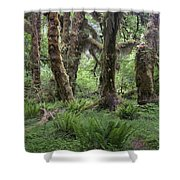 Hoh Rain Forest 3371 Shower Curtain