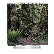 Hoh Rain Forest 3389 Shower Curtain