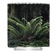 Hoh Rain Forest 3392 Shower Curtain