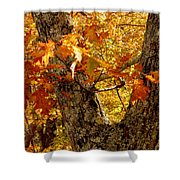 Hometown Series - Deep In The Woods Shower Curtain
