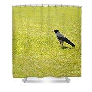 Hooded Crow Bird Gathering Hay Shower Curtain