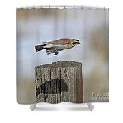 Horned Lark Shower Curtain
