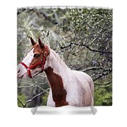 Horse 019 Shower Curtain