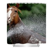 Horse Bath II Shower Curtain
