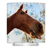 Horse In The Paddock Shower Curtain