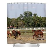 Horses Eat Hay On Ranch Shower Curtain