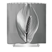 Houseplant  Spathiphyllum Floribundum  Peace Lily Shower Curtain