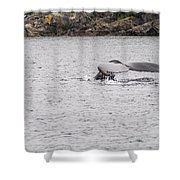 Humpback Whales 3 Shower Curtain