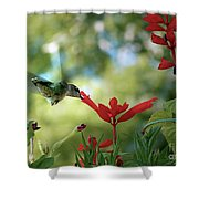 Hummingbird Delight Shower Curtain