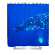 Humpback Whale Shower Curtain