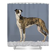 Hungarian Greyhound Shower Curtain