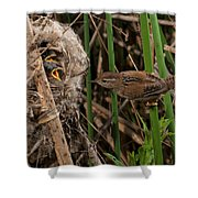 Hungry Brood Shower Curtain
