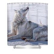 Huskies In Ilulissat, Greenland Shower Curtain