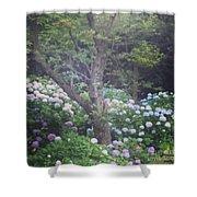 Hydrangea Flowers  Shower Curtain