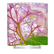 Hydrangeas Flowers Art Prints Hydrangea Art Giclee Baslee Troutman Shower Curtain