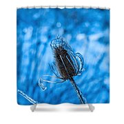 Icy Thistle Shower Curtain
