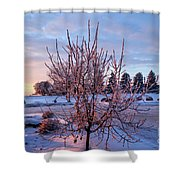 Icy Tree At Sunset  Shower Curtain