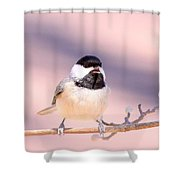 Img_0001 - Carolina Chickadee Shower Curtain
