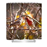 Img_0001 - House Finch Shower Curtain