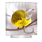 Img_0001 - Pine Warbler Shower Curtain