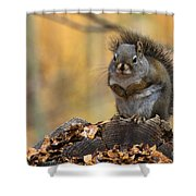 In The Pines Shower Curtain