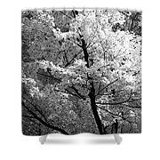 Infrared Tree Pic Shower Curtain
