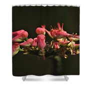 Insect. Shower Curtain