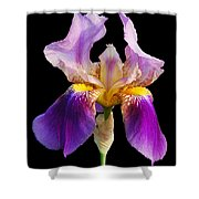 Iris 5 Shower Curtain