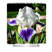 Iris Elegance Shower Curtain