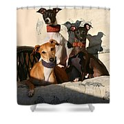 Italian Greyhounds Shower Curtain